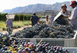 Viñateros y bodegueros definieron el precio base de la uva: será de 20 pesos